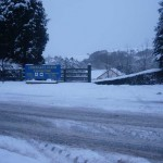 Erwbarfe in the snow